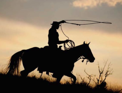 """Chasin' Wild Horses"""