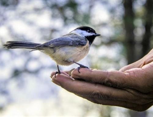 """""""Bird, Gift"""""""