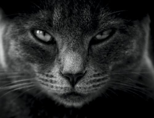 """""""The Black Cat"""""""
