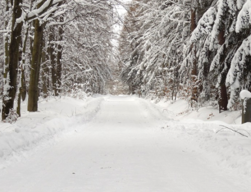 """""""Stopping by Woods on a Snowy Evening"""""""