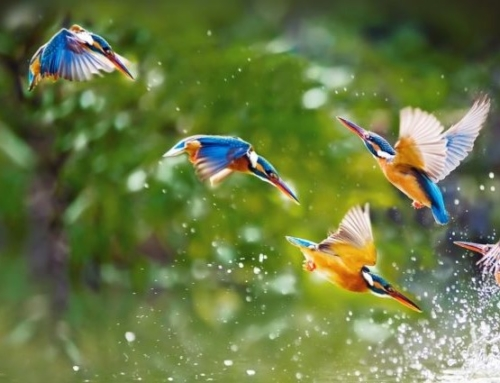 """""""As Kingfishers Catch Fire"""""""